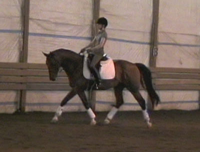 Darwin - Hanoverian gelding in training