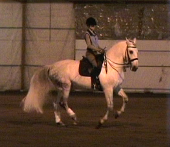 Koby and Janna - 3rd level Spanish Norman gelding in training