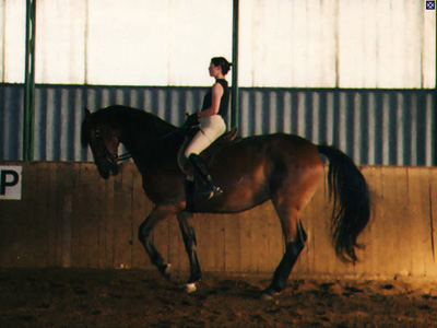 Janna training piaffe with Flesco - an 18hh Dutch Warmblood in Vienna